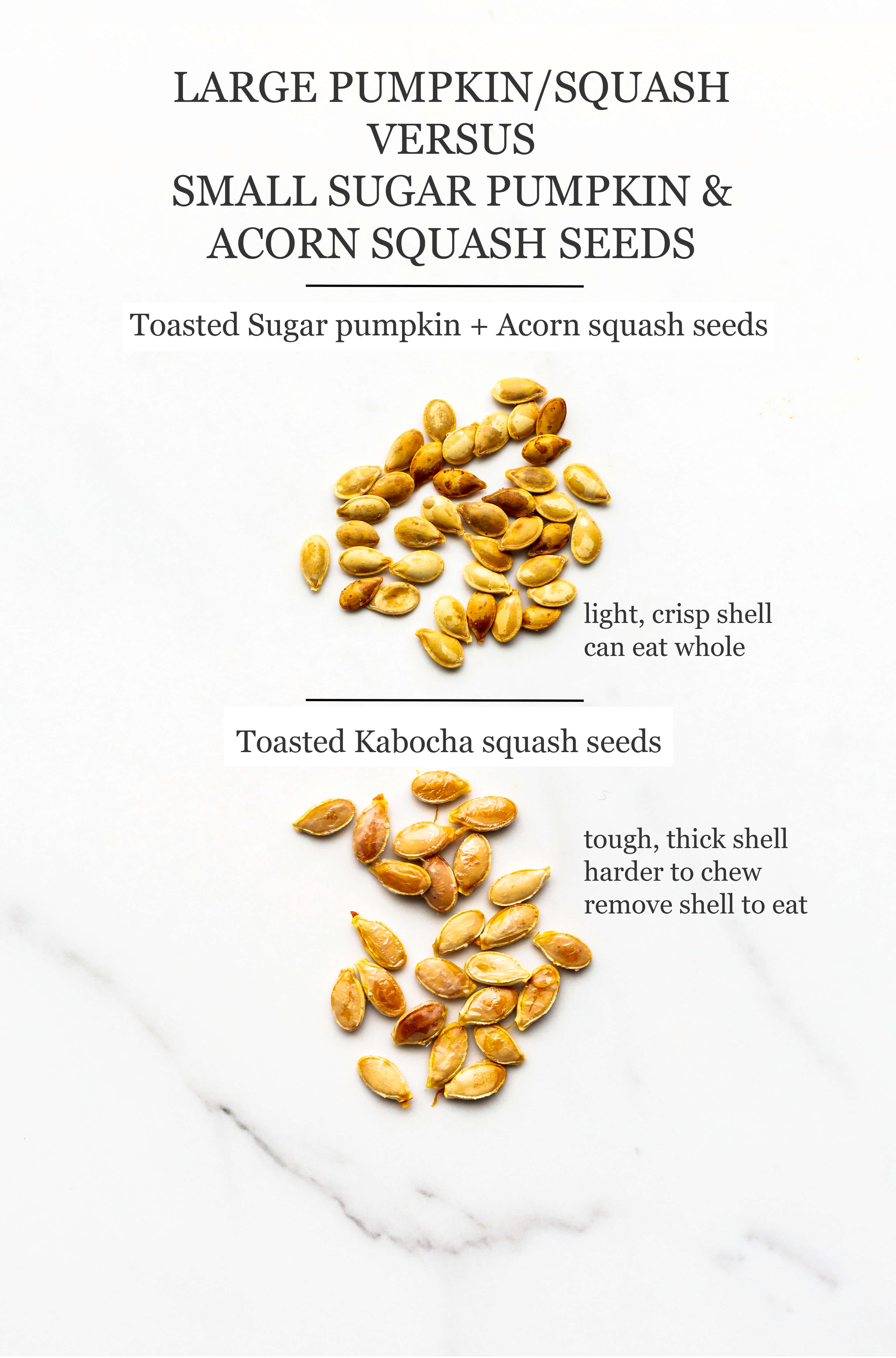 Toasted kabocha seeds compared to toasted acorn squash and Sugar pumpkin seeds to show that Kabocha and big pumpkins yield bigger seeds.